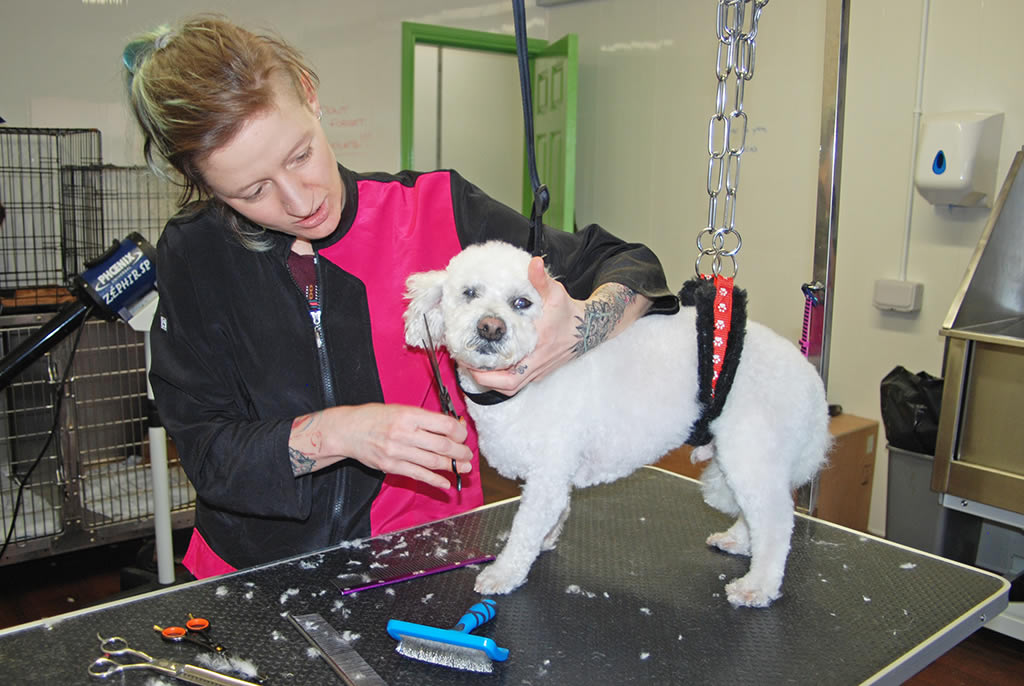 dog grooming in tralee